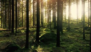 New Forest Website Design