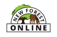 Website Designers in Lymington | New Forest Online Ltd